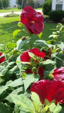 Edna Flower